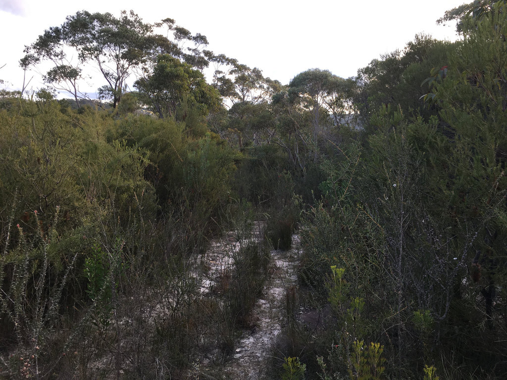 Central Track to Smiths Creek