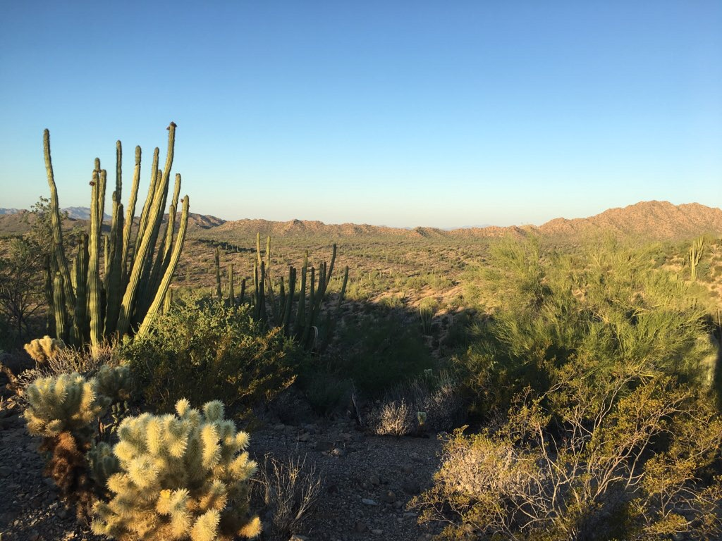 Desert View Trail
