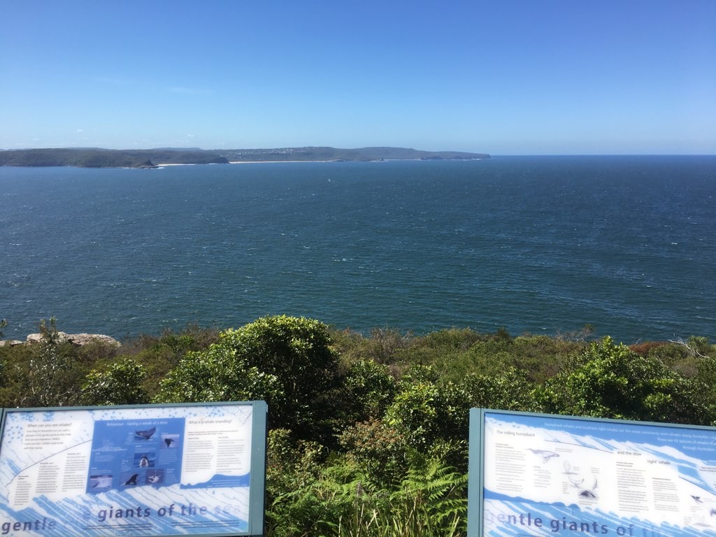 Palm Beach and Barrenjoey
